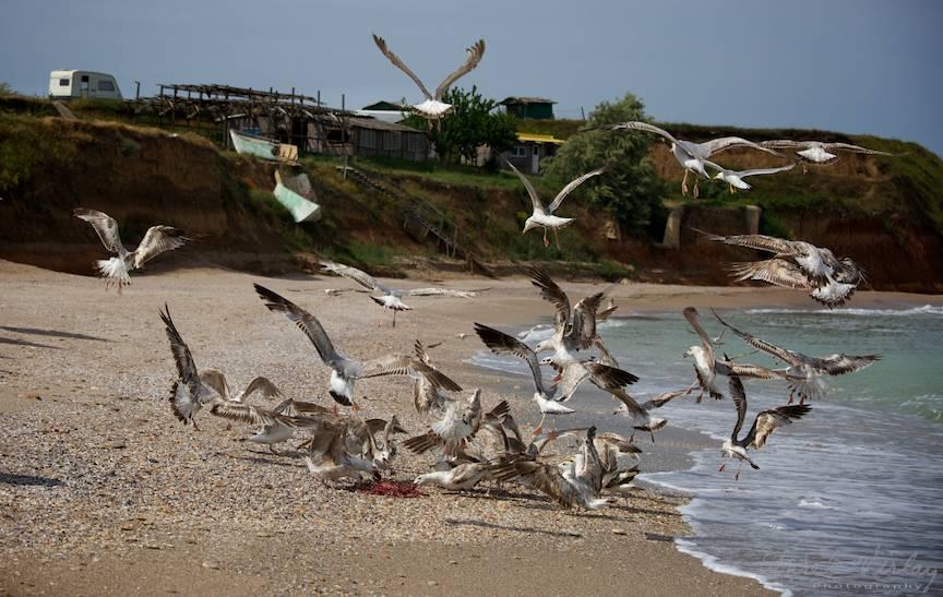 Pescarusi Vama Veche Fotografii cer nori albastri -7