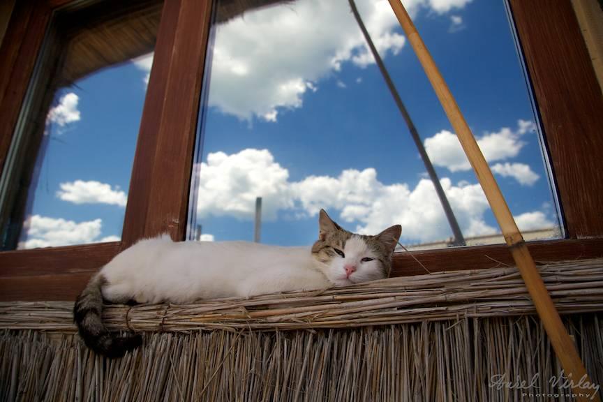 Vama Veche imagini fotoAV -21 ochii pisicii dormitand cer albastru cu nori