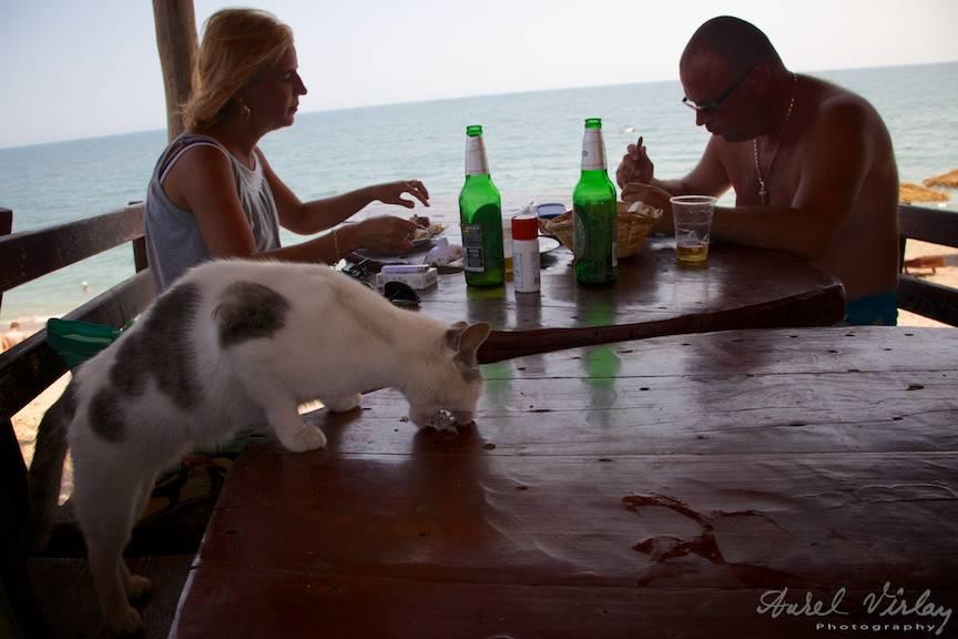 Pisica mancand direct de pe masa la Cherhanaua din Vama Veche.