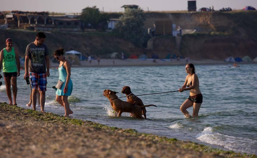 Vama Veche plaja - caini rasa joaca in Marea Neagra.