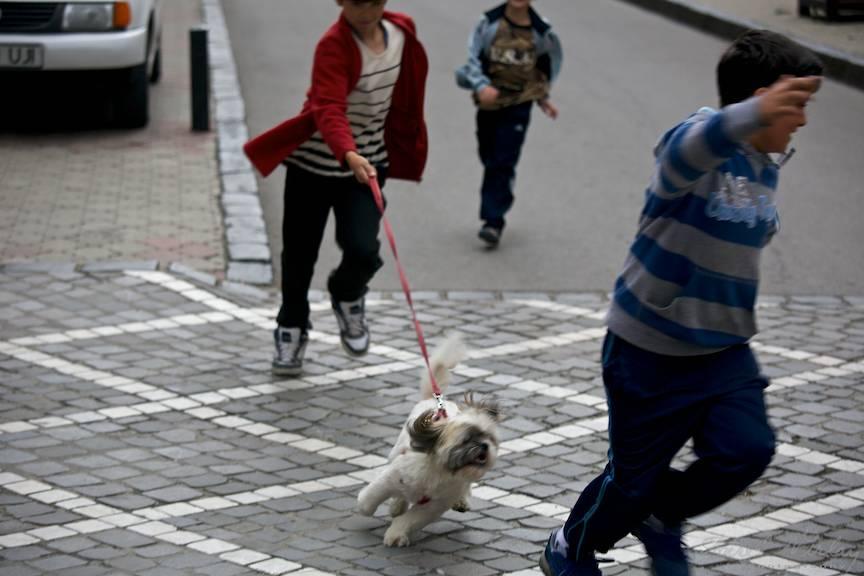 Fotojurnalism de strada in iuresul jocului a trei baieti si a unui caine.