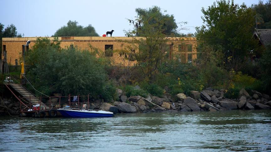 Cainele negru (simbol iubit de Tarkovsky) pe o casa in constructie in Delta.