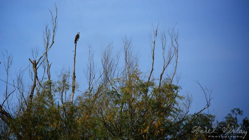 Copacii goi loc de supraveghere pentru un Soricar.