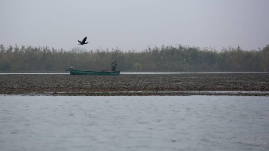 Paisaj din Delta Dunarii cu un cormoran si n pescar strangand plasele.