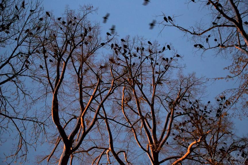 Fotografie in regim de lumina de seara dupa apusul soarelui.