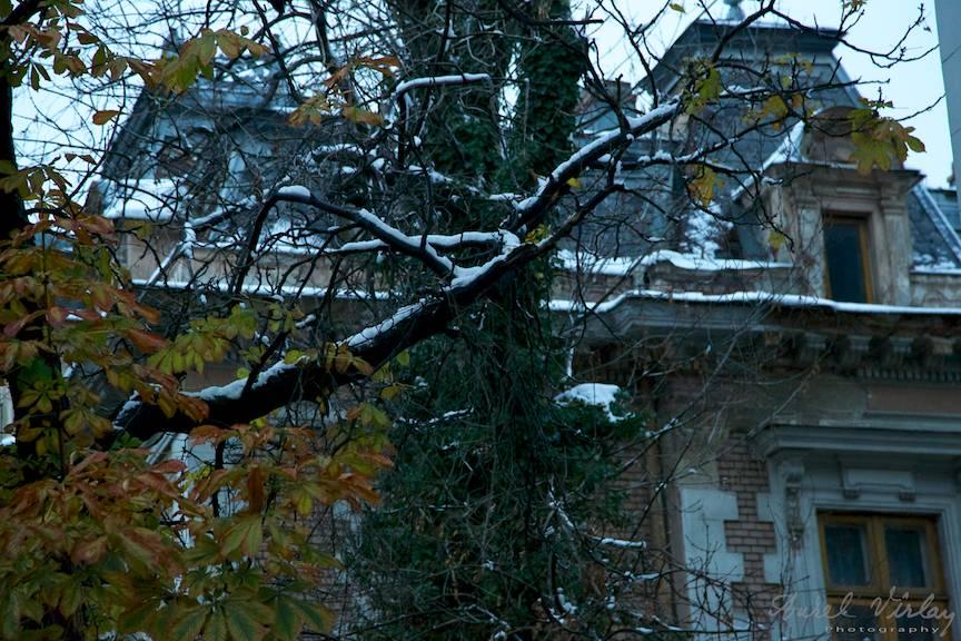 Natura si arhitectura in prag de iarna bucuresteana.