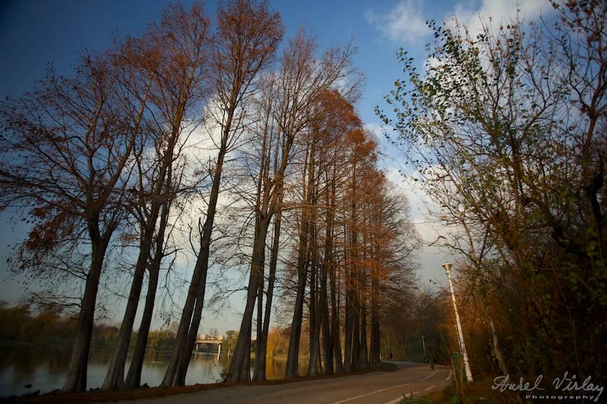 Apus de Soare - Fotografie de peisaj cu pini in Parcul Tineretului.