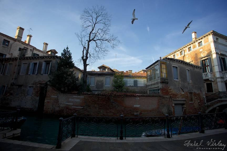Peisaj foto din Venetia cu un copac avantandu-se spre cer si doi pescarusi plutind in aer.