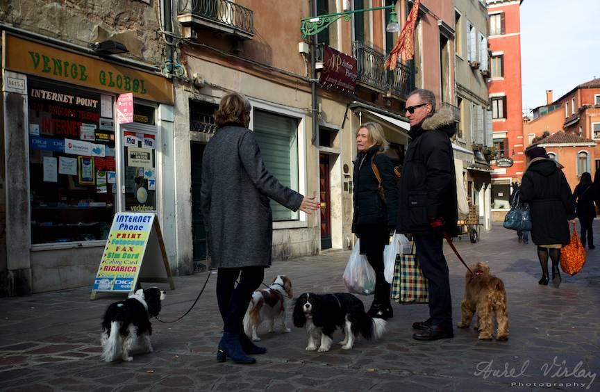 Animale de companie la plimbarea de dupa-amiaza in Venetia.