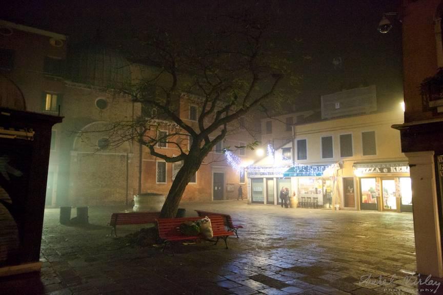 Copac singuratic intr-o mica piata venetiana.