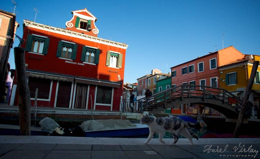 Pisica alergand pe strada principala a orasului Burano.