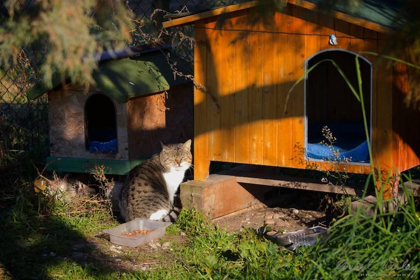 In curti parasite, custi mai mari si mai mici de pisici hranite de vecinii ramasi in insula.