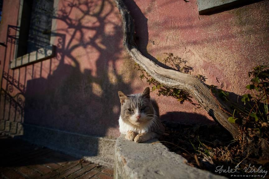 Umbre aruncate de caramiziul zidului si pisica in postura de sfinx.