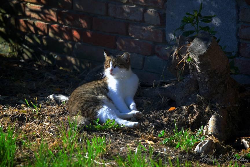 Lumina laterala a soarelui incalzind boticul si spatele pisicii cu aer de stapana.