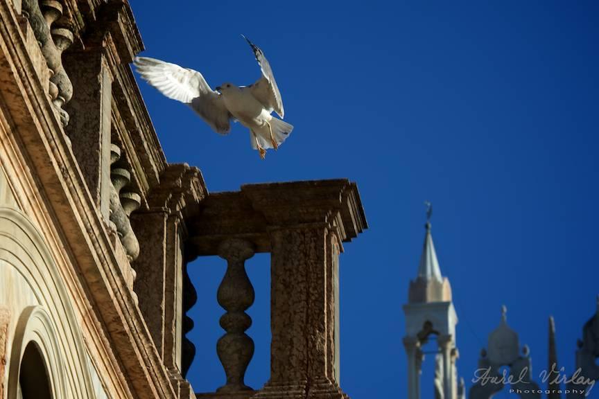 Pescarus aterizand pe detalii arhitectonice ale grandioasei Piete San Marco.