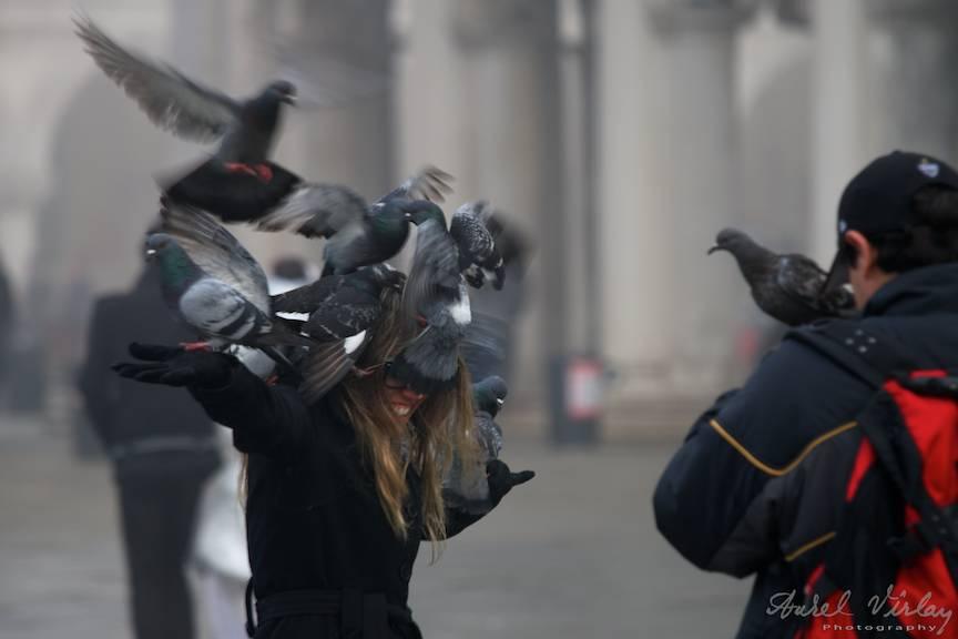 Porumbeii din Piata San Marco precum pasarile lui Hichcock ataca o turista.