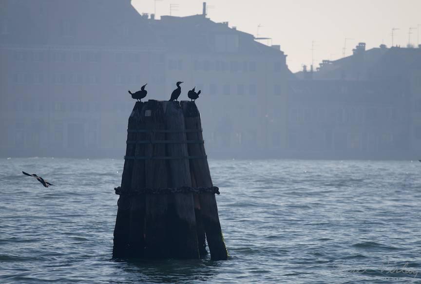 Bustenii din laguna reprezinta teritorii ale familiilor de cormorani.