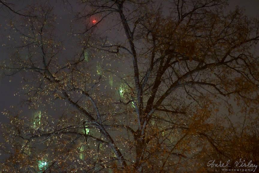 Copac ravasit si ferestre verzi peirdute in ceata.