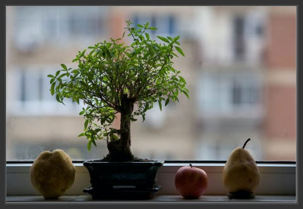 Compozitie foto cu bonzai si fructe la fereastra - by Aurel Virlan