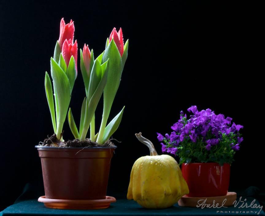Macro Fotografie de 1 Martie cu un aranjament de flori si o tartacuta.