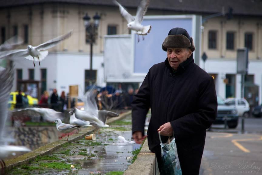 Batranul hraneste pescarusii Dambovitei cu covrigi - Fotojurnalist Aurel Virlan