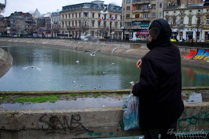 Peisaj citadin cu amorsa-foto batranul ce hraneste pescarusii raului Dambovita din Bucuresti.
