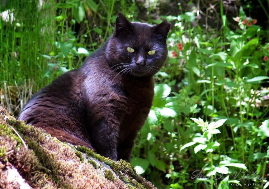 _Manastirea Rila Bulgaria Foto-Aurel-Virlan 02a pisica neagra ca o felina egipteana
