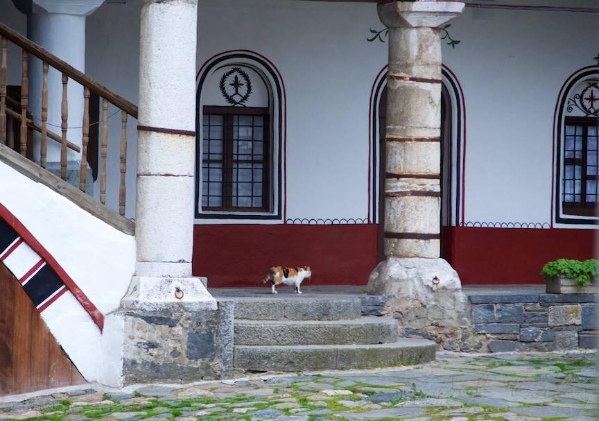 _Manastirea Rila Bulgaria Foto-Aurel-Virlan 15 orice biserica are o pisica