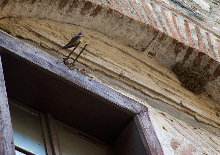 _Pelerinaj-Muntele-Athos-Foto-AurelVirlan-Emails123