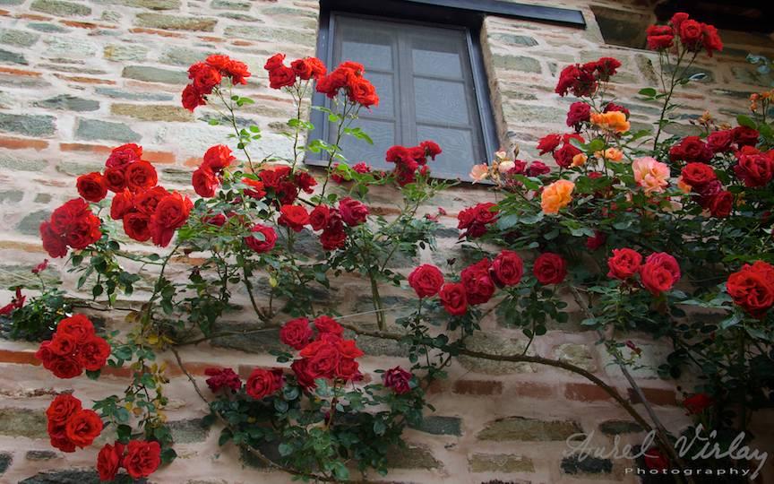 Flori la fereastra unui calugar in Gradina Maicii Domnului.