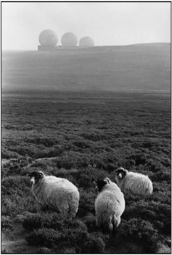 Anglia Yorkshire - The Middleton Hout peisaj cu trei oi foto Martine Franck 1978