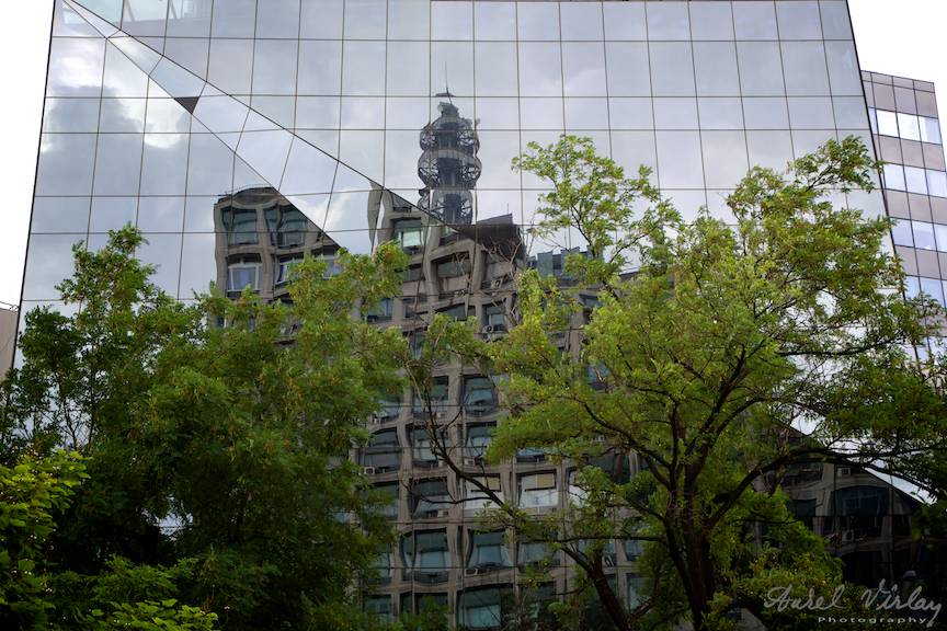 Copaci rataciti intre cladirile de sticla ale unui peisaj citadin modern.