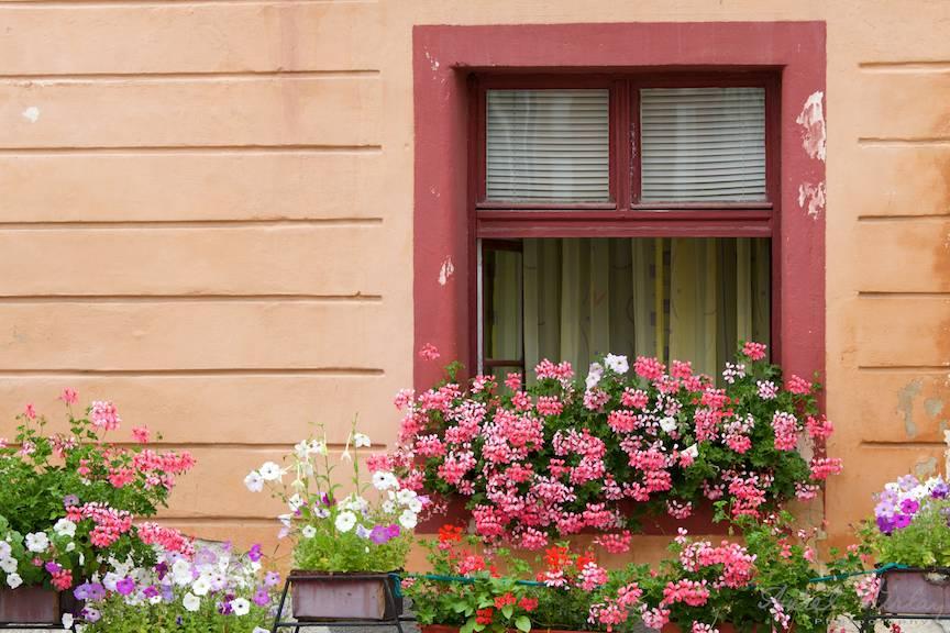 Fereastra cu flori ce incanta ochii turistilor.