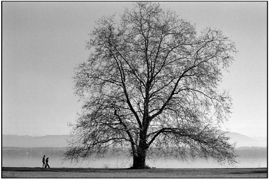 Compozitie foto Martine-Franck - Elvetia *On the banks of Lake Geneva*