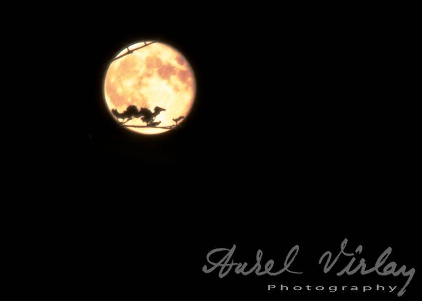 Fotografii cea mai mare Luna Plina foto AurelVirlan Web-Image4