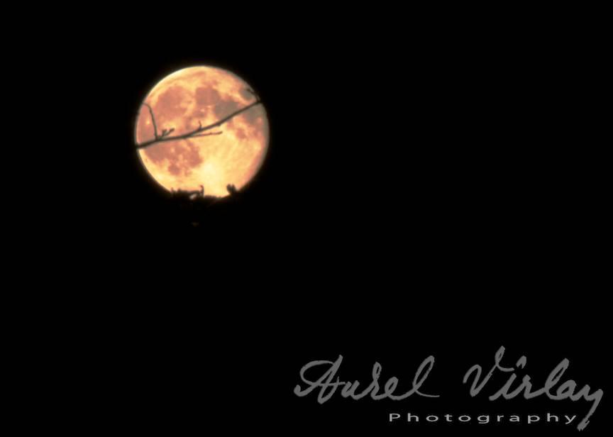 Fotografii cea mai mare Luna Plina foto AurelVirlan Web-Image5