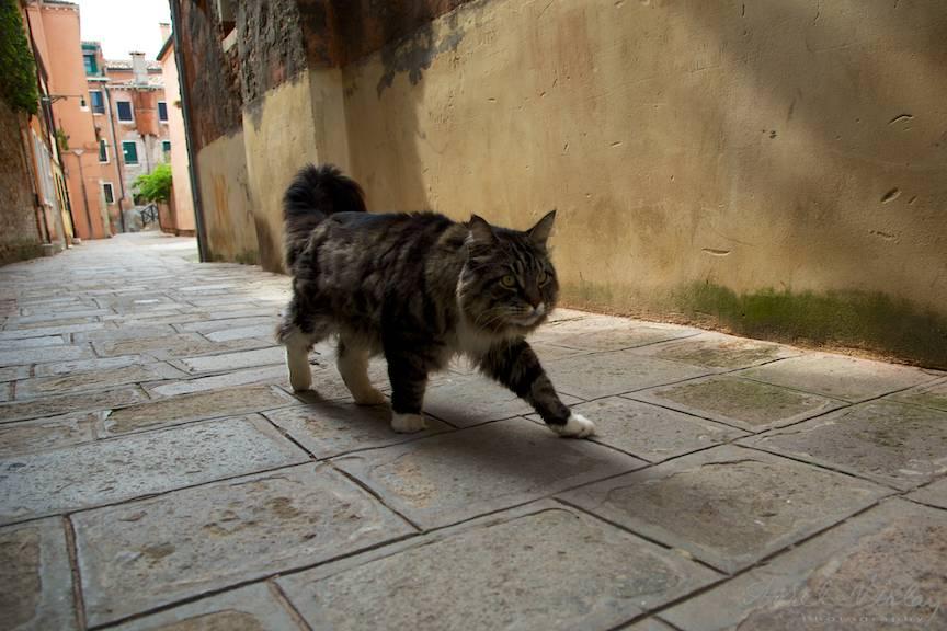 Impresii Foto Venice Italy - Aurel Virlan - WebEmails11