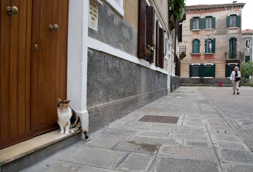 Peisaj foto venetian cu pisica.