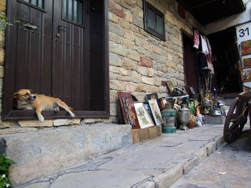 Excursie Velico-Tarnovo - Foto Aurel Virlan - 03 caine lenes dormitand la usa