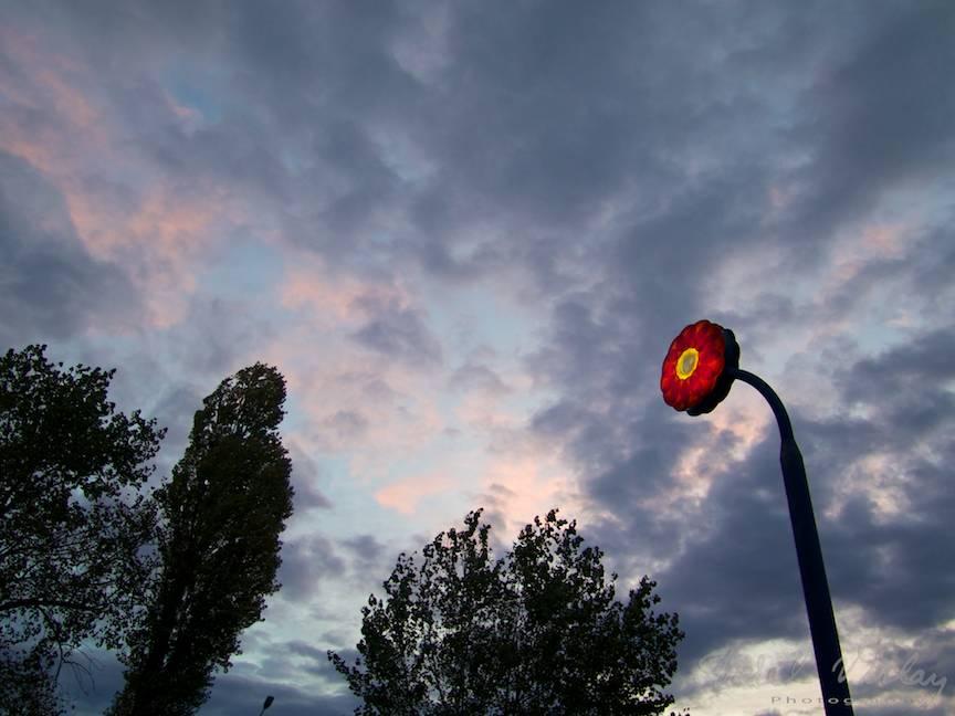 Excursie inceputa sub cerul plin de nori- Foto Aurel Virlan - Rasarit de soare printre norii plumburii.