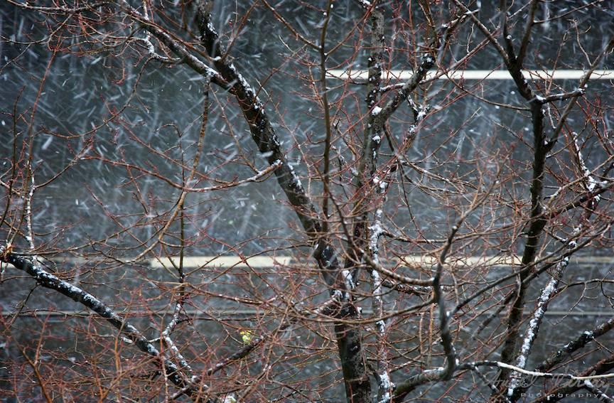 Fotografii prima ninsoare Bucuresti fulgi strada - FotoAurelVirlan e 30