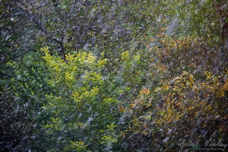 Dansul tinerilor fulgi de nea cu frunzele tomnatice.