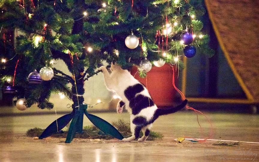 Fotografie brad impodobit pisici TVR Bucuresti - fotojurnalist Aurel Virlan - Emails 11
