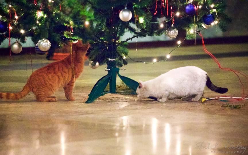 Fotografie brad impodobit pisici TVR Bucuresti - fotojurnalist Aurel Virlan - Emails 3