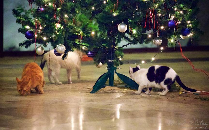 Fotografie brad impodobit pisici TVR Bucuresti - fotojurnalist Aurel Virlan - Emails 5