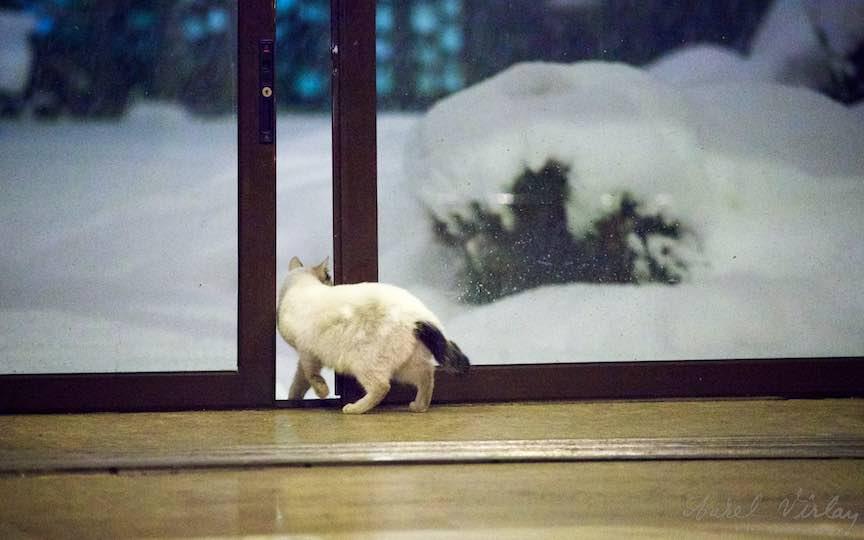 Fotografie brad impodobit pisici TVR Bucuresti - fotojurnalist Aurel Virlan - Emails 7