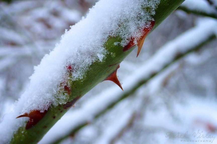 Fotografii ninsoare iarna Bucuresti - fotojurnalism Aurel Virlan - Emails 21