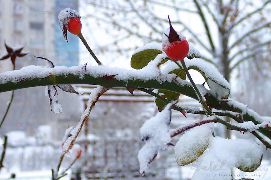 Fotografii ninsoare iarna Bucuresti - fotojurnalism Aurel Virlan - Emails 21a