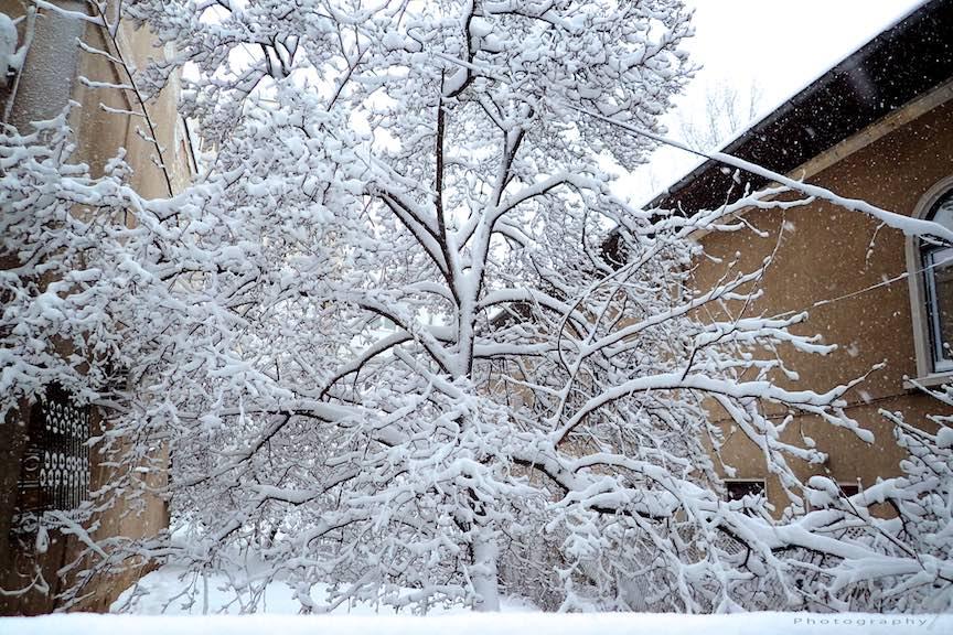 Fotografii ninsoare iarna Bucuresti - fotojurnalism Aurel Virlan - Emails 35