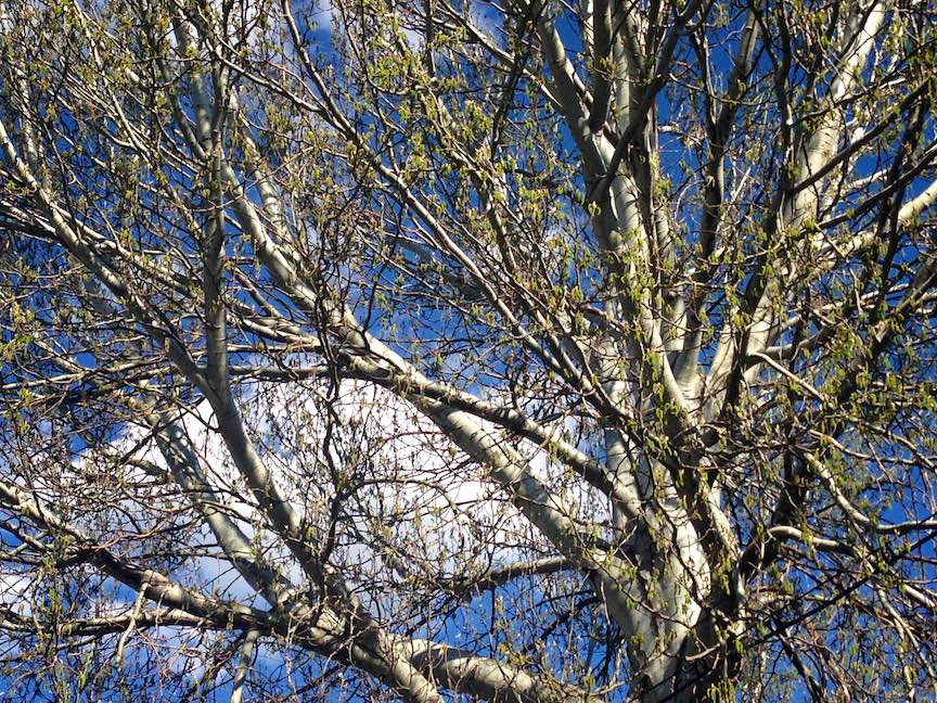 Cerul cu nori printre ramuri ca Dialog cu VIzibilul - Fotografie de Corina